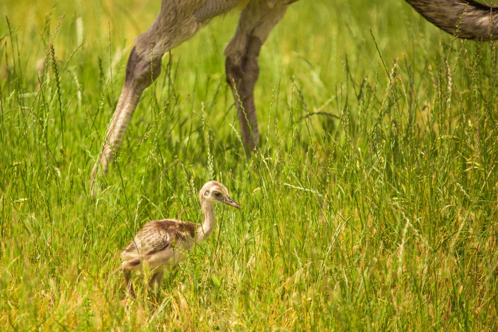 Wildlife Safari Winston, OR